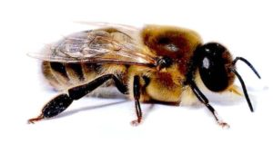 Bee drone training